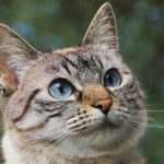 Kattenspeelgoed voor uw kat